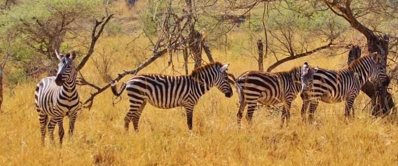 Photos from #Tanzania #Travel - Image 35