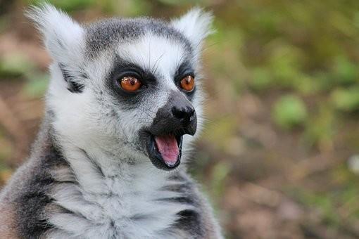 Photos from #Madagascar #Travel - Image 20