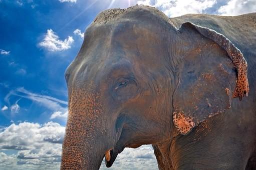 Photos from #SriLanka #Travel - Image 94