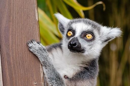 Photos from #Madagascar #Travel - Image 99
