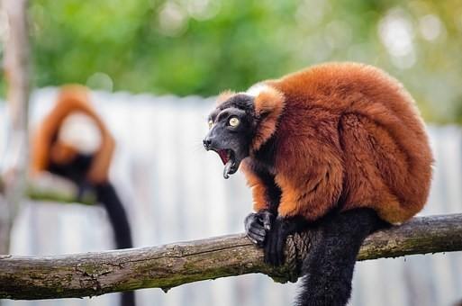 Photos from #Madagascar #Travel - Image 9