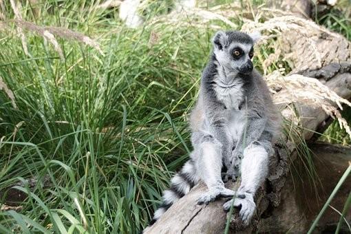 Photos from #Madagascar #Travel - Image 66