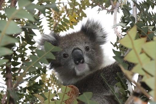 Photos from #Australia #Travel - Image 58