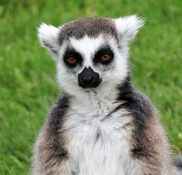 Photos from #Madagascar #Travel - Image 81