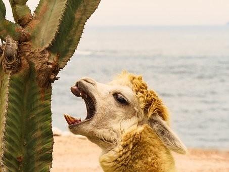 Photos from #Peru #Travel - Image 66
