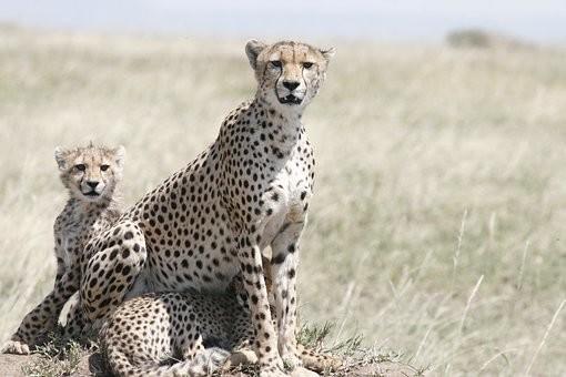 Photos from #Tanzania #Travel - Image 10