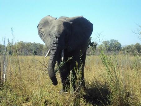 Photos from #Malawi #Travel - Image 13