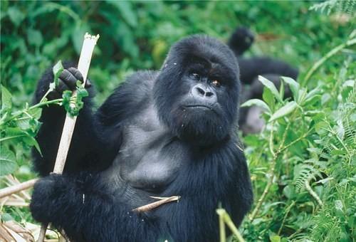 Photos from #rwanda #Travel - Image 8