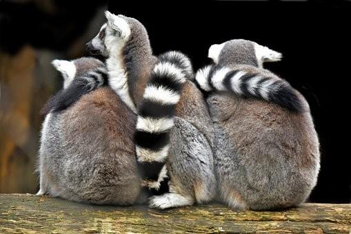 Photos from #Madagascar #Travel - Image 84