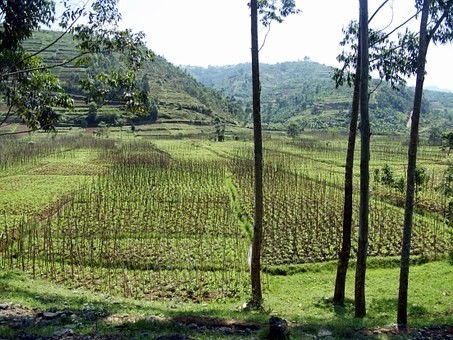 Photos from #rwanda #Travel - Image 24