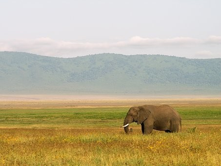 Photos from #Tanzania #Travel - Image 6
