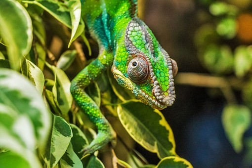 Photos from #Madagascar #Travel - Image 101