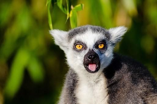 Photos from #Madagascar #Travel - Image 71