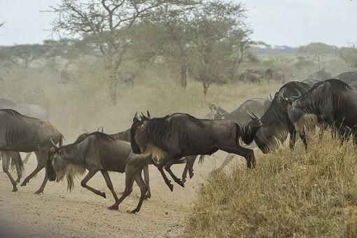 Photos from #Tanzania #Travel - Image 50