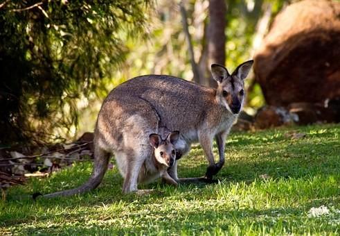 Photos from #Australia #Travel - Image 65