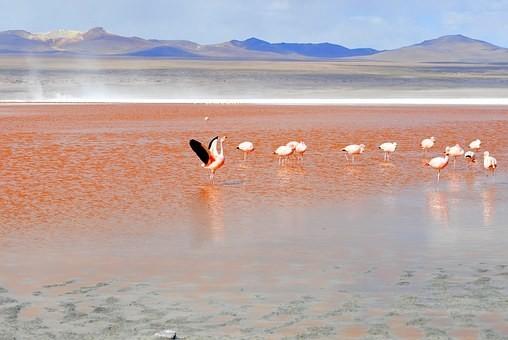 Photos from #Bolivia #Travel - Image 110