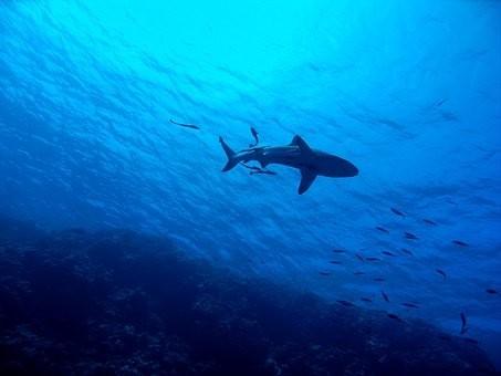 Photos from #Australia #Travel - Image 15