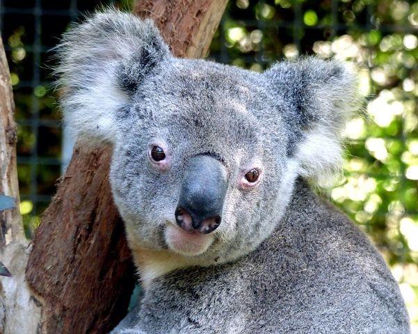 Photos from #Australia #Travel - Image 141
