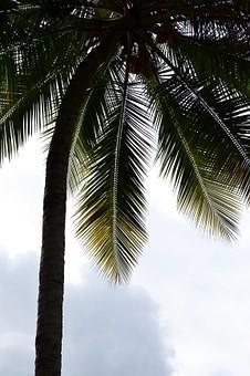 Photos from #SriLanka #Travel - Image 20