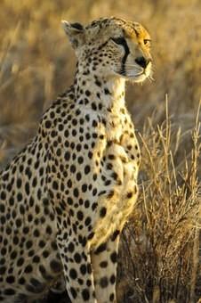 Photos from #Tanzania #Travel - Image 44
