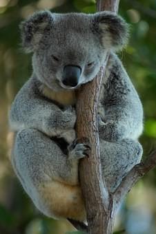 Photos from #Australia #Travel - Image 109