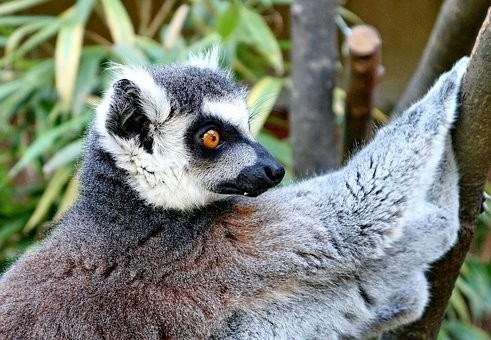 Photos from #Madagascar #Travel - Image 69