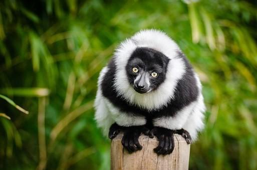 Photos from #Madagascar #Travel - Image 102