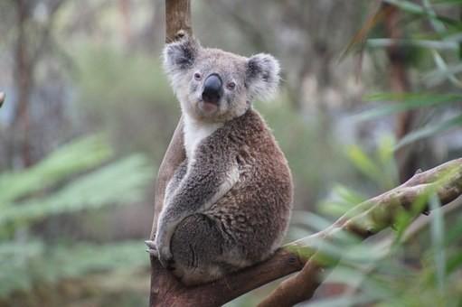 Photos from #Australia #Travel - Image 29