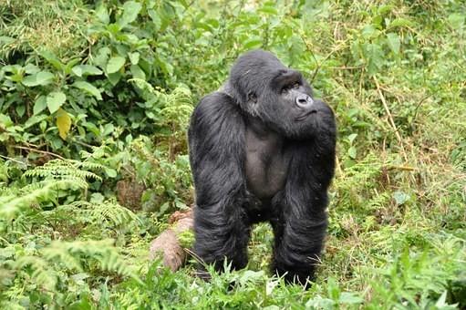 Photos from #rwanda #Travel - Image 14
