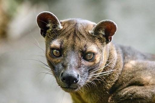 Photos from #Madagascar #Travel - Image 2