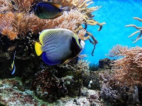 Photos from #Australia #Travel - Image 81