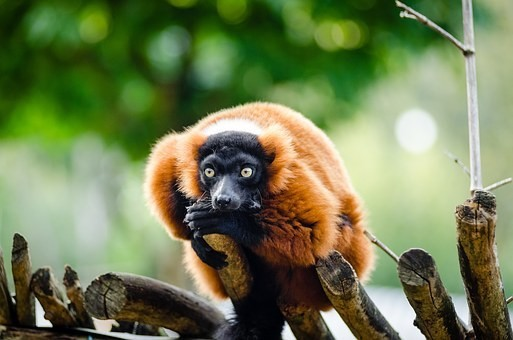 Photos from #Madagascar #Travel - Image 62
