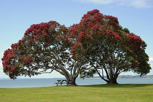 Photos from #New_Zealand #Travel - Image 58