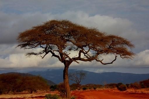 Photos from #Kenya #Travel - Image 37