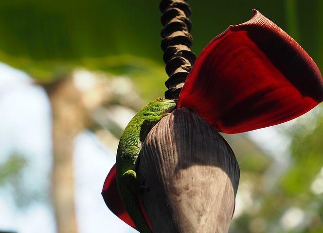 Photos from #Madagascar #Travel - Image 59