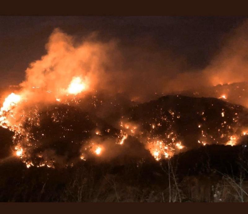 #حرائق في غابات #لبنان #لبنان_يحترق - صورة 4
