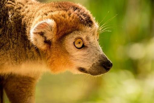 Photos from #Madagascar #Travel - Image 75