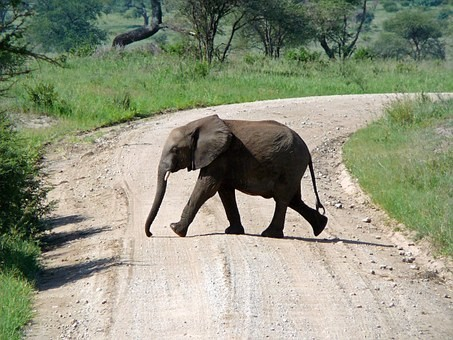 Photos from #Tanzania #Travel - Image 3