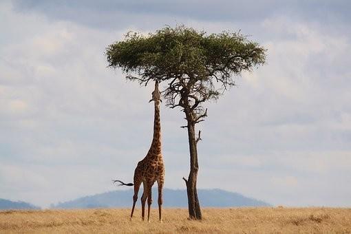 Photos from #Kenya #Travel - Image 94