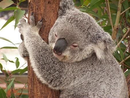 Photos from #Australia #Travel - Image 195