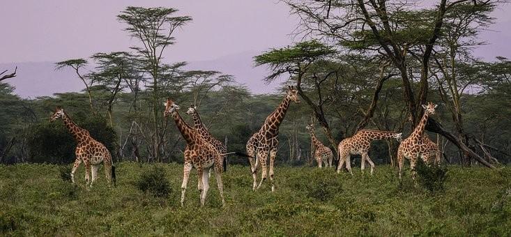 Photos from #Kenya #Travel - Image 56