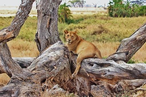 Photos from #Tanzania #Travel - Image 53