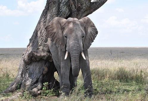 Photos from #Tanzania #Travel - Image 19
