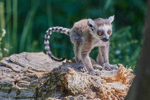 Photos from #Madagascar #Travel - Image 29