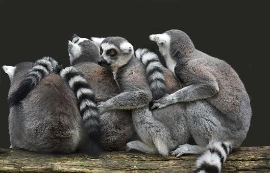 Photos from #Madagascar #Travel - Image 1