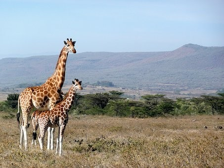 Photos from #Kenya #Travel - Image 50