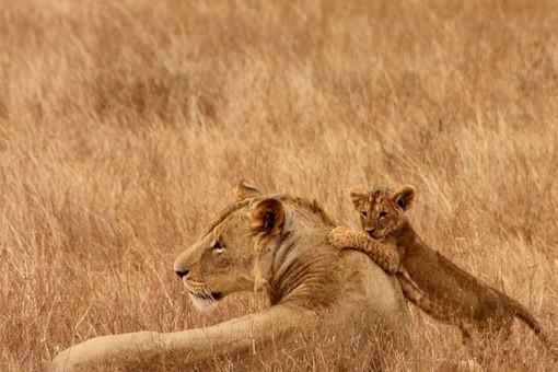 Photos from #Kenya #Travel - Image 21
