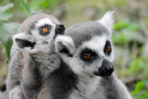 Photos from #Madagascar #Travel - Image 43