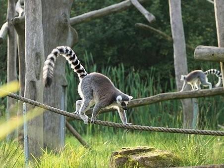 Photos from #Madagascar #Travel - Image 90