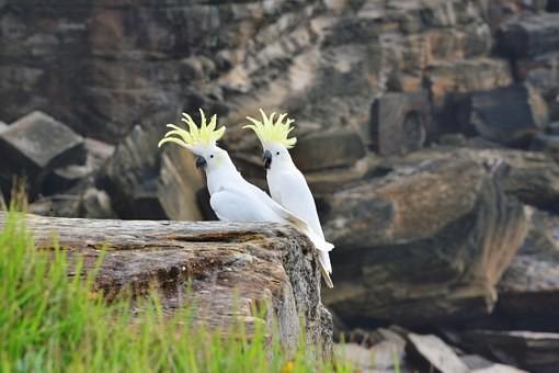Photos from #Australia #Travel - Image 17